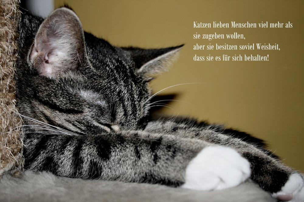 sprüche katzen englisch Katzenweisheiten! Foto & Bild | tiere, haustiere, katzen Bilder  sprüche katzen englisch