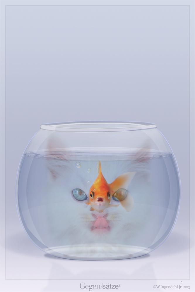 Katze_vs_Goldfisch