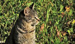 Katzi im Sonnenschein
