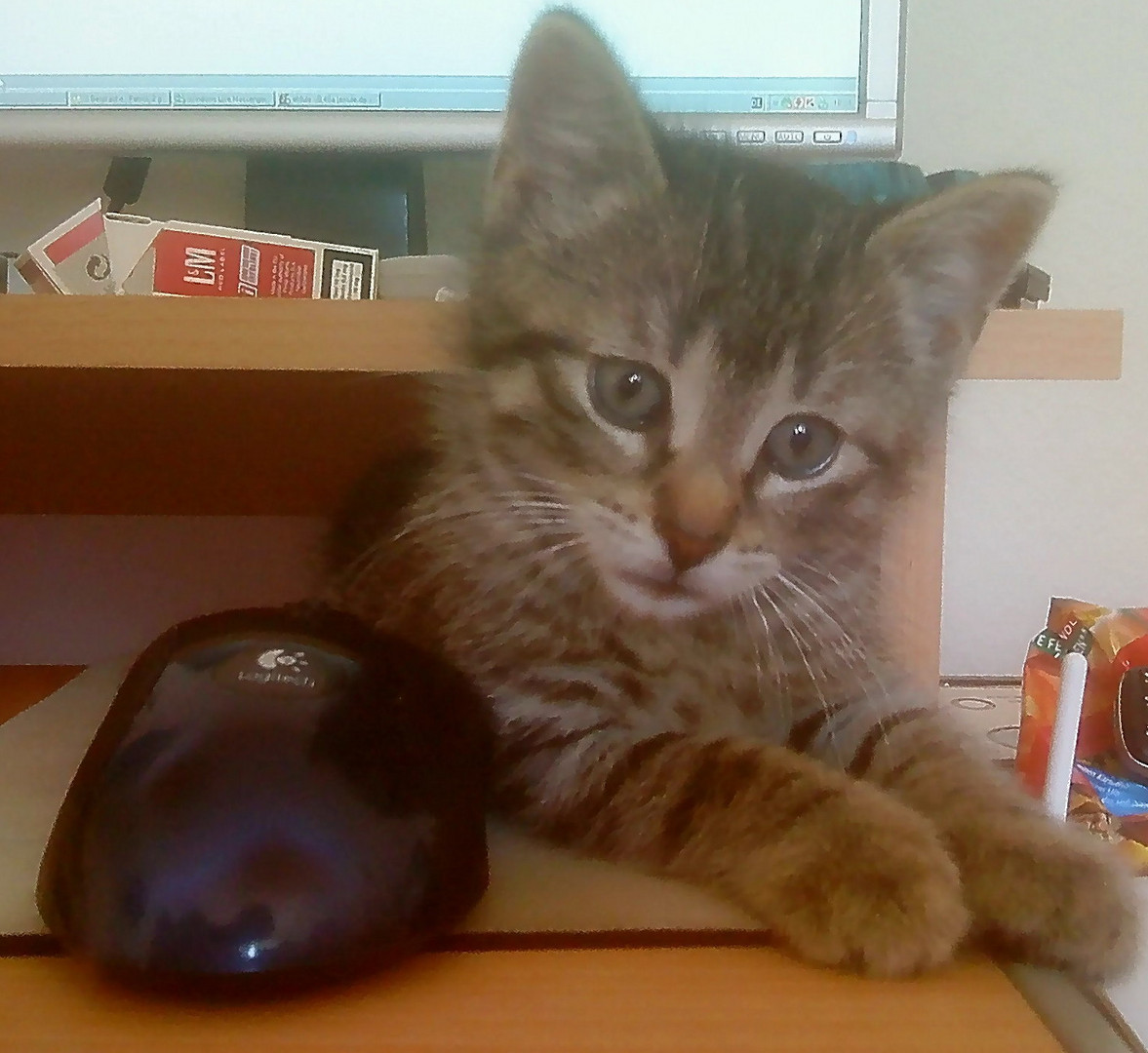 Katz&Maus ;)