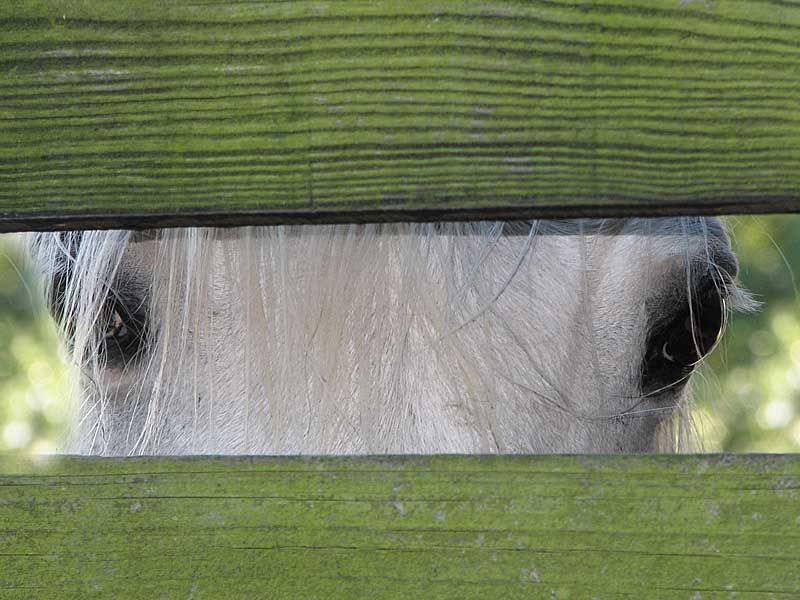 Keeba Through The Fence