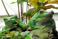 keep cool - feel green!