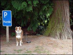 Kein Anwohnerparkplatz !
