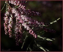 Kein Blümchen, aber Blüten hat's auch! ;-))