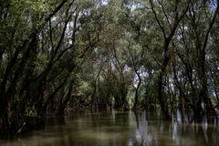 Kein Everglades nur Donaudelta
