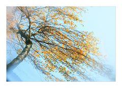 kein Herbststurm