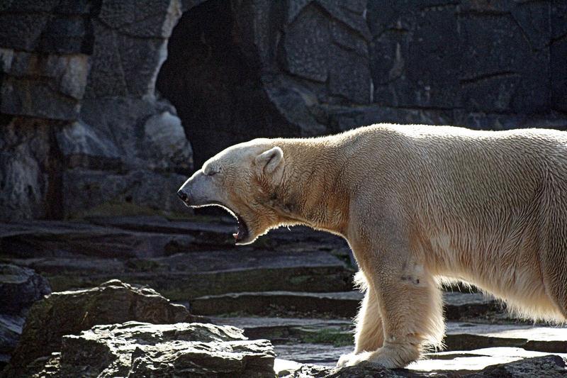 kein Knut , ich hoffe trotzdem gut