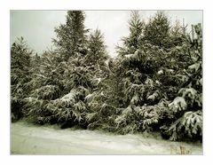 Kein Schnee von gestern...