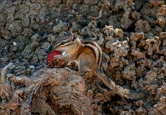 kein verwöhntes parkhörnchen