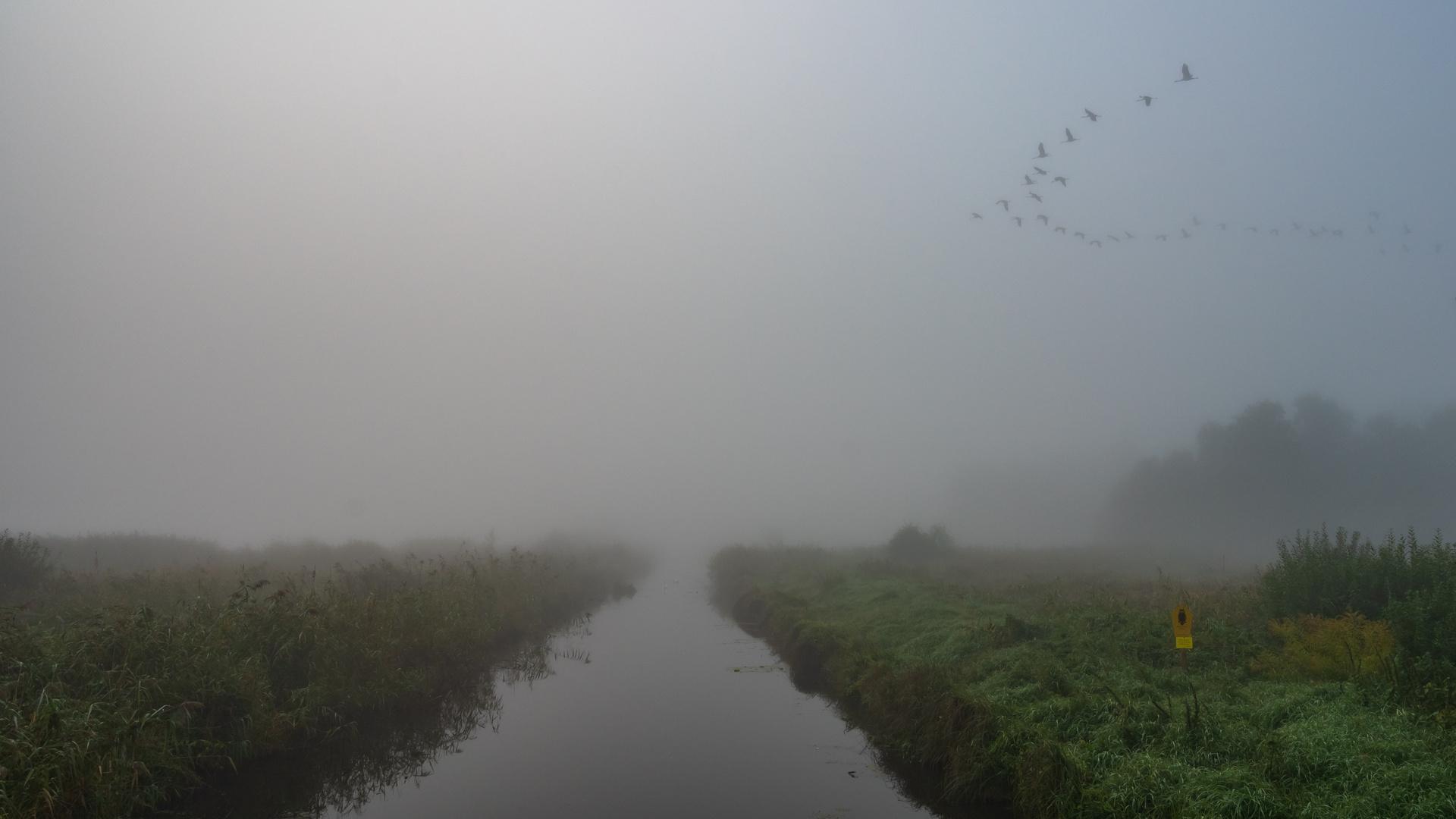 Kein Wetter für Wildlife-Fotografen