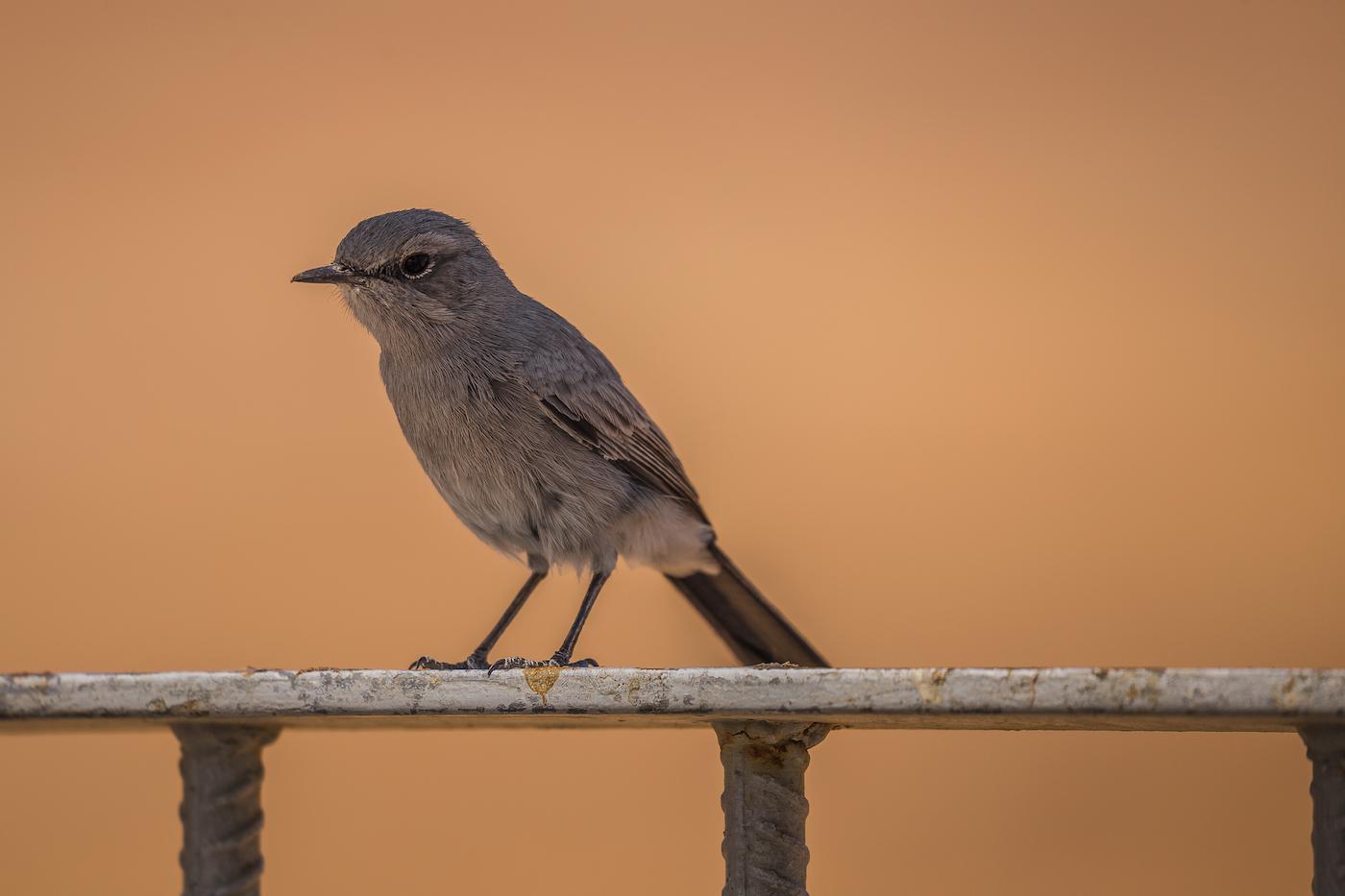Keine Ahnung, was für ein Vogel das ist