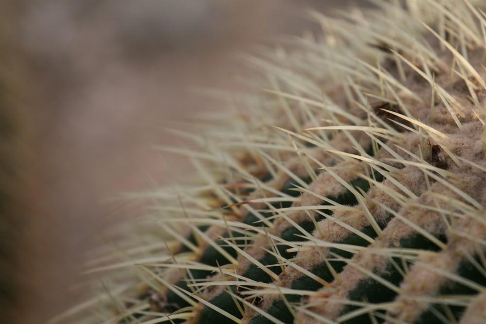 Keine Ahnung was fürn Kaktus, auf jeden Fall ...