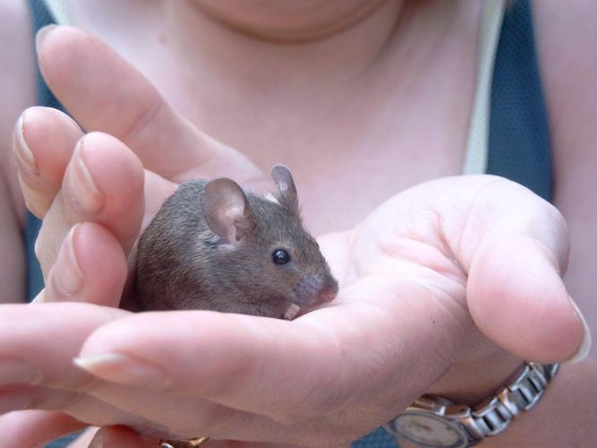 Keine Angst kleine Maus