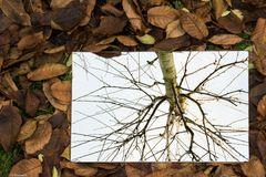 Keine Blätter im Baum