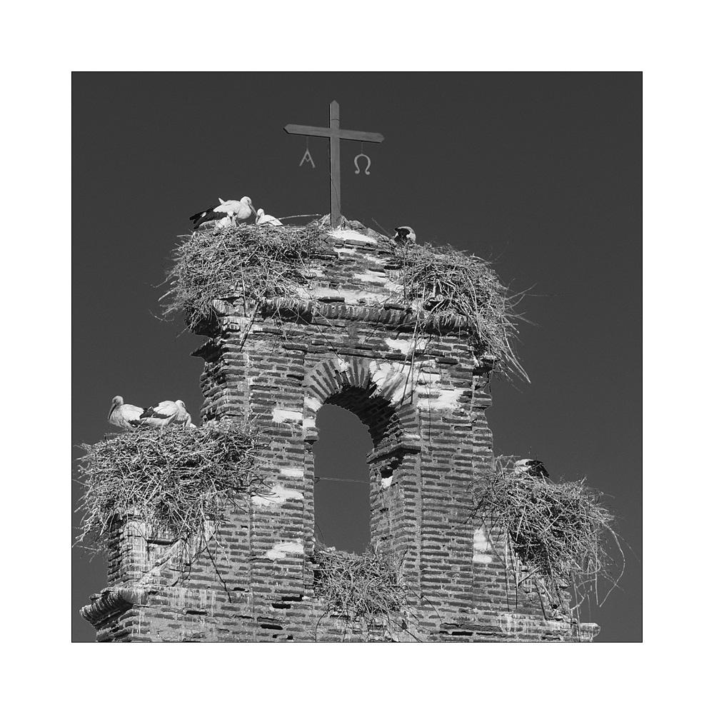 Keine Kirche ohne Störche ...
