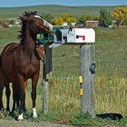 keine Post, mmmh!