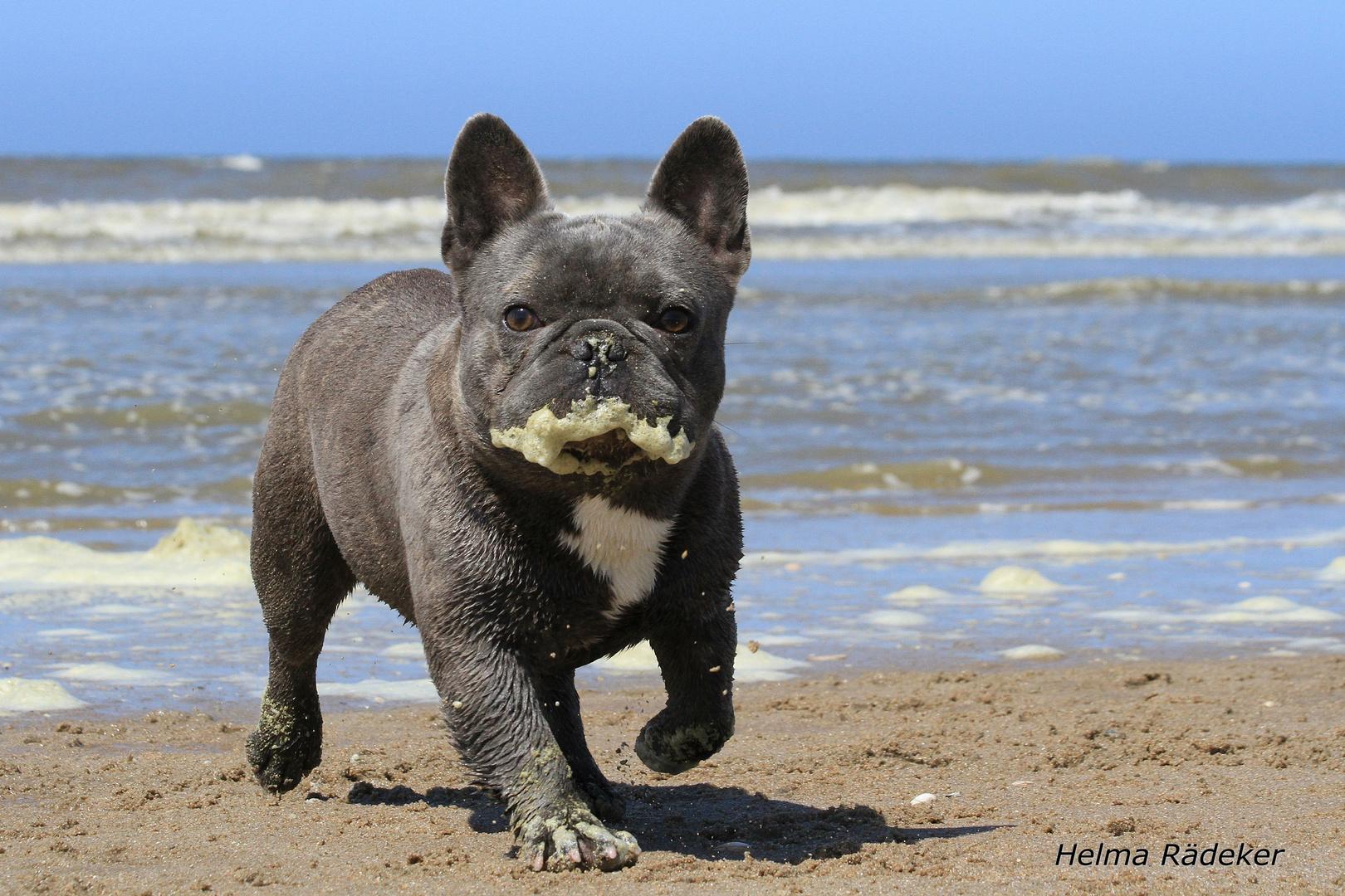 Hund schaum vorm mund