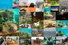 Kenia Bilder Collage