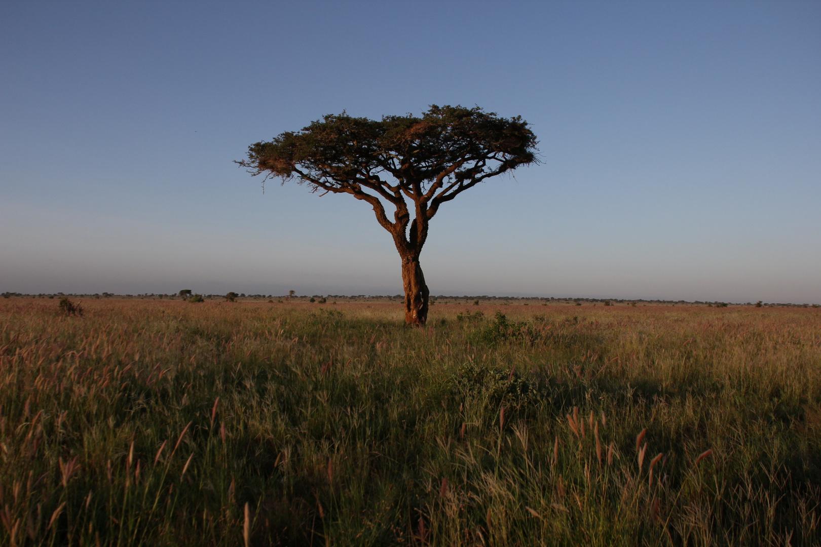 """Kenia - """"der Baum"""""""