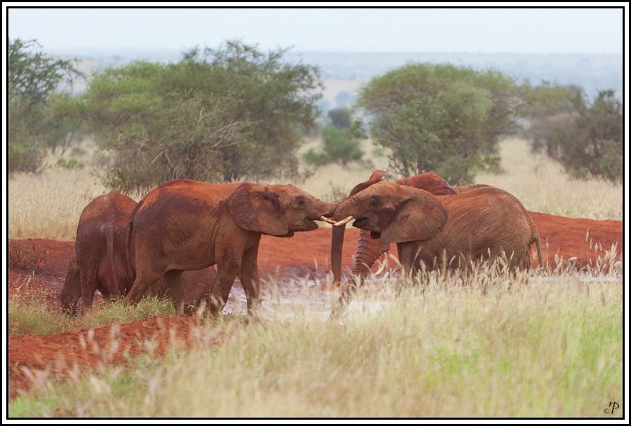 Kenia-Eindrücke, Safari 23