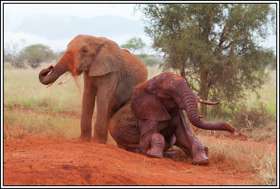 Kenia-Eindrücke, Safari 26