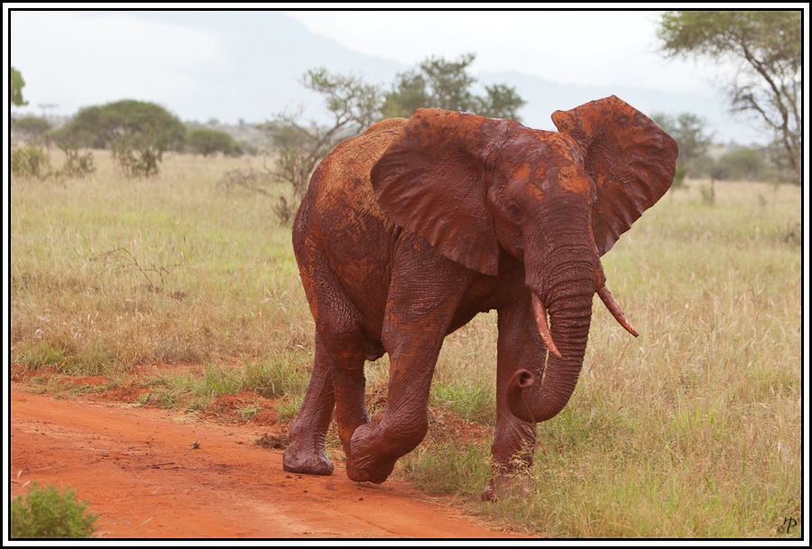 Kenia-Eindrücke, Safari 27