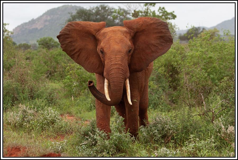 Kenia-Eindrücke, Safari 28