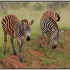 Kenia-Eindrücke, Safari 29