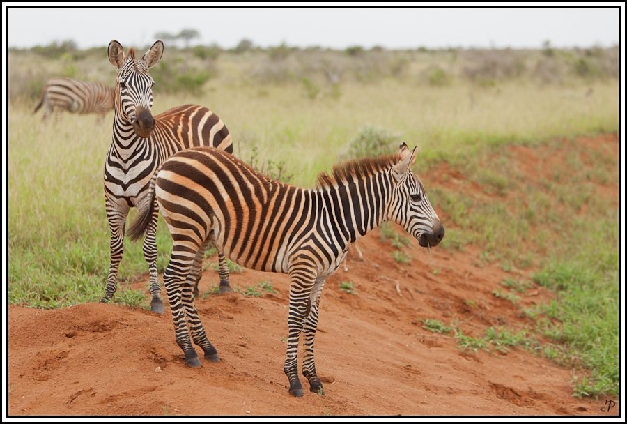 Kenia-Eindrücke, Safari 30