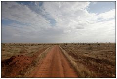 Kenia-Eindrücke, Safari 36