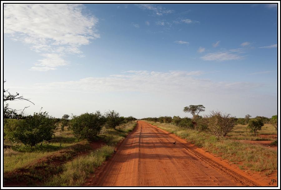 Kenia-Eindrücke, Safari 40