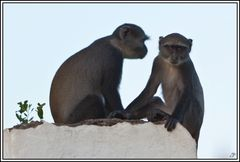 Kenia-Eindrücke, Safari 47