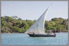 Kenia-Eindrücke, Safari 48