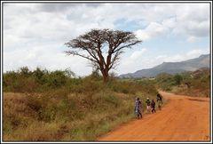 Kenia-Eindrücke, Safari