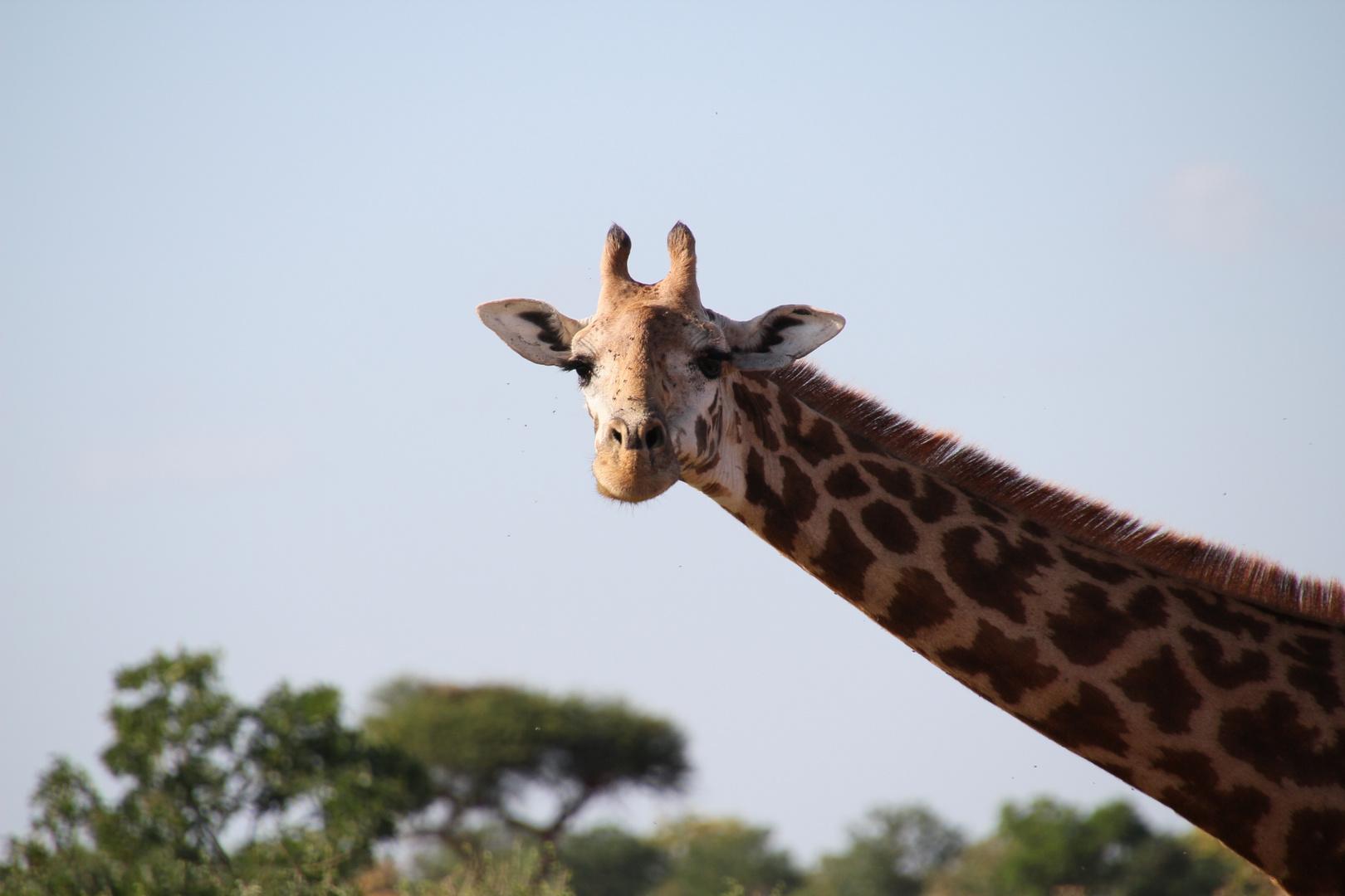 Kenia - Guckst Du II