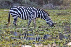 Kenia Masai Mara September 2020