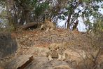 Kenia-Safari Tsavo East National Park 8