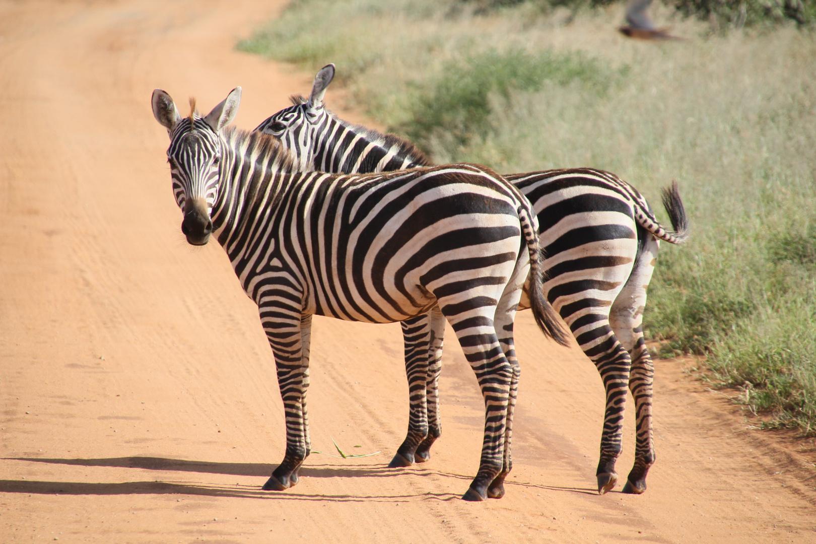 Kenia - Zebrastreifen