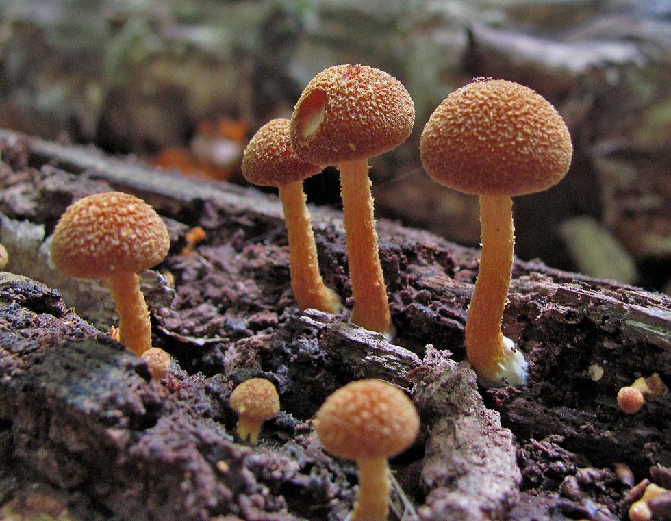Kenne diese Pilze leider nicht