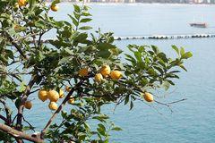 Kennst Du das Land in dem die Zitronen blühen ?