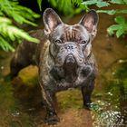 Kennt ihr den Hund von Indiana Jones???