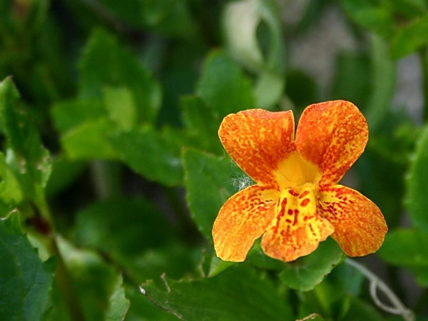 Kennt jemand den Namen dieser Pflanze