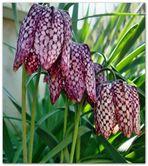 ...kennt jemand diese Pflanze ?