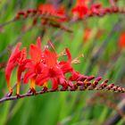 Kennt jemand diese Pflanze?