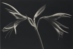 Kenro Izu - Still life - 24