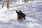 Kerry im Schnee