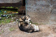 Kettenhund   DSC_2207