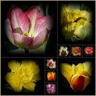 Keukenhof -Blumenparadies