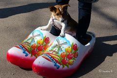 Keukenhof - Holland - Ein Hund - auf großen Schuhen