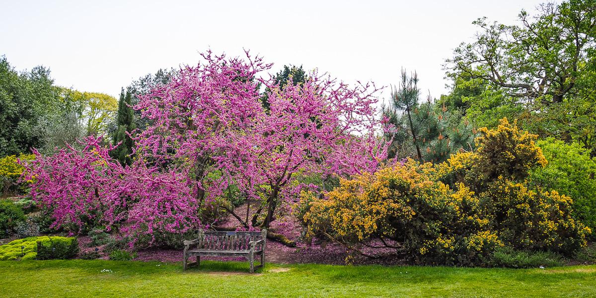 kew gardens botanischer garten london am 30 april 2017 foto bild london fr hling natur. Black Bedroom Furniture Sets. Home Design Ideas